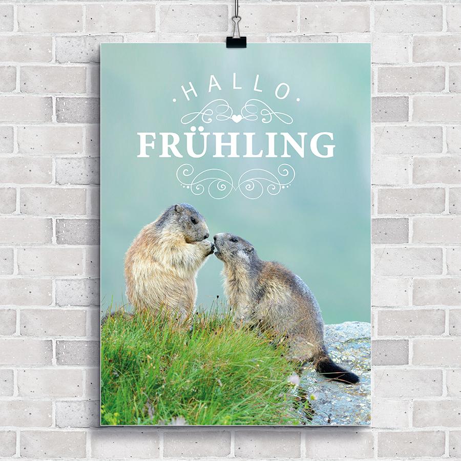 Frühlingsplakat mit zwei Murmeltieren