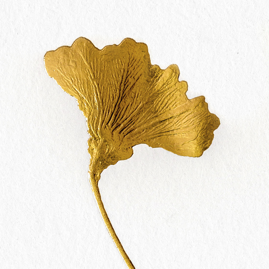 Kunstblatt Seelilie